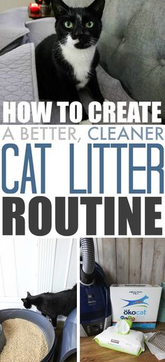 Tips for creating a better cat litter routine that keeps smells and messes at bay and doesn't drive you crazy! #ad #bebetterthanclay