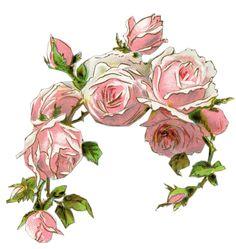 Pink Roses Old Design Shop