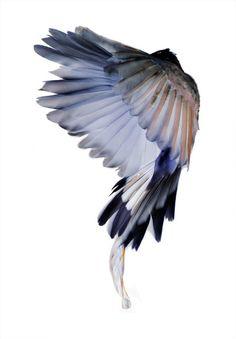 a un ángel se le perdieron sus alas