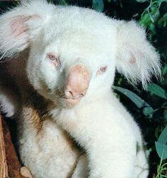albino animals - Google zoeken