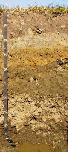 Soils soil profile ornamental plant care information for Soil 4th grade science