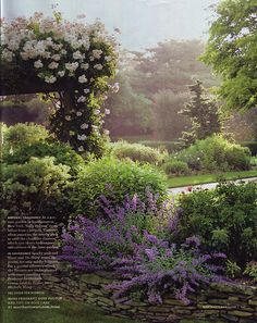 I would love to be wondering through this garden in the early morning- what a peaceful pretty scene
