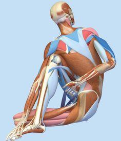 Browse the Bandha Yoga Image Archive. Subscapularis Muscle, Dancers Pose, Yoga Images, Gluteus Medius, Yoga Anatomy, Lotus Pose, Yoga Books, Dog Poses, Pigeon Pose