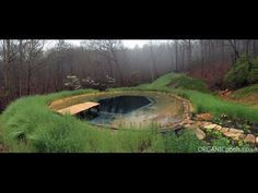 How to Build an Organic Natural Pool | 1001 Gardens