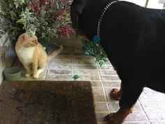Seamus likes the neighbor's cat, Orange.