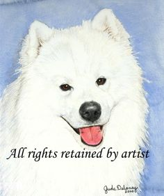 Samoyed Art Reproduction Print Graff by Jude Delaney by CaninaArt, $25.00