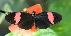 Rare Butterfly Species | Beautiful Wing Patterns Reveal Butterfly's Colourful Past