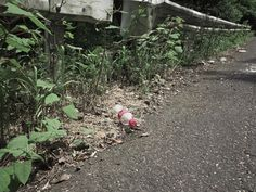 kyoto/refuse