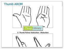 Thumb Active Range of Motion