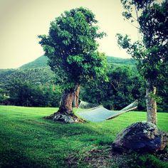 All you need is a hammock!  #Nevis #Caribbean #hammock