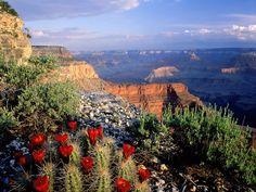 images of grand canyon | Grand Canyon National Park Arizona