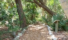 The Conservancy of Southwest Florida in Naples Florida is a nature center next to the Naples Zoo with boat tours, butterfly garden, nature trail and more. Naples Zoo, Naples Florida, Florida Adventures, Nature Center, Boat Tours, Places Ive Been, Beautiful Places, Vacation, Plants
