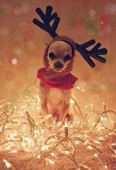 Tiny little reindeer
