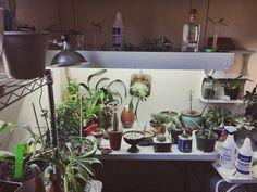 Indoor Orchid, Fern and Cactus Garden 💚