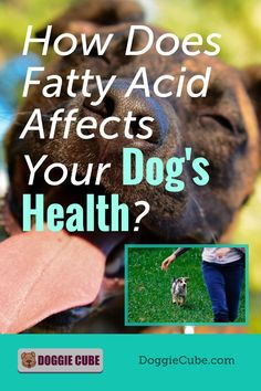 Besides promoting healthy skin and coat, there are several other health benefits of fatty acid for dogs. This can be obtained from fish oil or other natural seeds and oil. Find out more. #dognutrition #fattyacidfordogs #fishoilfordogs