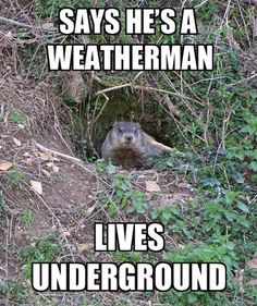 Groundhogs are heralded as weatherman, which is weird, since they live underground.