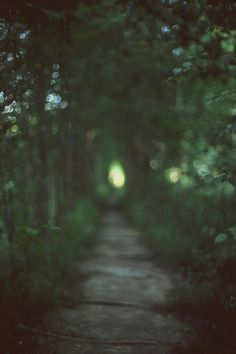 """In some mysterious way woods have never seemed to me to be static things. In physical terms, I move through them; yet in metaphysical ones, they seem to move through me."" John Fowles"