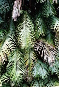 Jungle plants fineart photo print by Kristoffer Eikrem. #plant #plants #fineartphotography #print #inspo #inspiration #art #jungle #palms