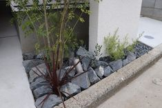 Dry Garden, Plants, Outdoor, Decor, Outdoors, Decoration, Plant, Outdoor Games, Decorating
