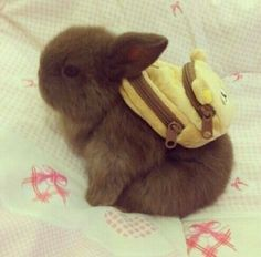 Cutest bunny ever with his little back pack lol