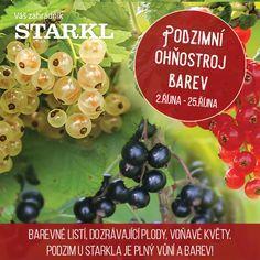 2. - 25. října Listy, plody, květy - podzim je plný barev. Speciální prodejní akce Zahradního centra STARKL v Čáslavi zaměřená na podzim v zahradách, na balkonech, terasách... #starklzahradnik #podzimniohnostrojbarev #prodejniakce #podzim #autumn #slevy #akce #zahradnictvi #caslav #starkl #zahrada