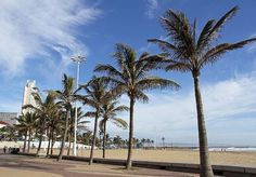 Palm trees on the Durban Beachfront Palm Trees, Explore, City, Beach, Water, Outdoor, Palm Plants, Gripe Water, Outdoors