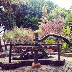 Cuando el encanto llama a tus ojos.... #Fuerteventura #pajara #islascanarias #canaryislands #compartetuviaje #travel Tenerife, Canario, Garden Bridge, Outdoor Structures, Instagram Posts, Canary Islands, Palmas, Eyes, Lanzarote