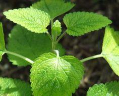 Creating a Healing Garden – 9 Healing Herbs You Can Grow Yourself