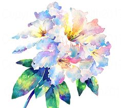 Watercolour Flower Art Print RHODODENDRON LODERI is individually printed from my original Watercolour Painting and hand finished with my signature to add that unique, personal touch. Print Quality :- Printed on professional archival quality, 100% cotton, acid free, 300gsm fine art paper