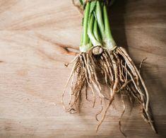 Laat je groenten opnieuw groeien: 8 soorten die je eindeloos kunt hergebruiken - Foodness Plant Hanger, Garden, Plants, Om, Muffins, Fruit, Life, Lavender, Garten