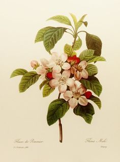 Apple Tree Fruit Flower Print Wall Decor Hanging by SkitterCats
