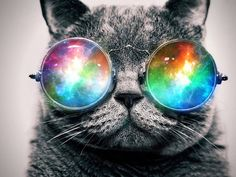 Cats | trippy | colours