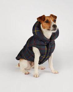 Tartan Dog Vest - Ralph Lauren Home For the Pet - RalphLauren.com      SIZE LARGE  3