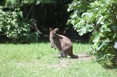 HOP Pockets - Virginia Zoo in Norfolk