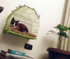 Are Cats Smarter Than Dogs Refferal: 4789130987 Cat Gym, Oriental Cat, Cat Hacks, Cat City, Cat Shelves, Cat Enclosure, Cat Accessories, Cat Crafts, Pet Life