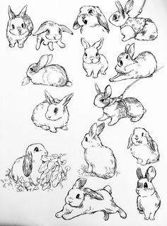 kneel 2 condition all the feelings that u feel — bevsi:BUNS Animal Sketches, Art Drawings Sketches, Cute Drawings, Animal Drawings, Bunny Sketches, Bunny Tattoos, Rabbit Tattoos, Rabbit Drawing, Rabbit Art