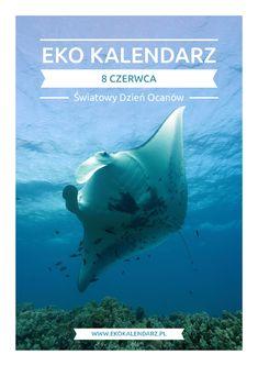 Światowy Dzień Oceanów – pakiet edukacyjny