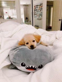 Super Cute Puppies, Cute Baby Dogs, Cute Little Puppies, Cute Dogs And Puppies, Cute Little Animals, Cute Funny Animals, Pet Dogs, Doggies, Funny Puppies