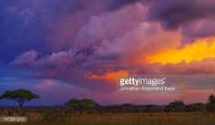 147851210-stormy-dramatic-sunset-over-the-serengeti-gettyimages.jpg (542×316)