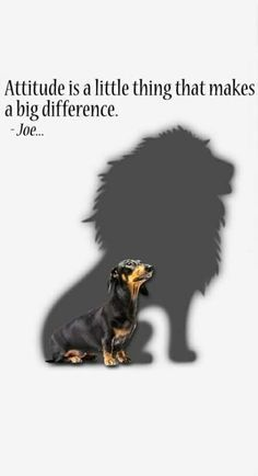 Best tattoo dog heart truths 39 ideas The Effective Pictures We Offer You About tattoo A qua Dachshund Quotes, Dachshund Art, Dachshund Puppies, Dog Quotes, Daschund, Dachshund Tattoo, Animals And Pets, Cute Animals, Delphine