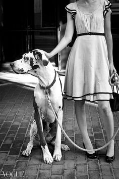 Great Dane dog in Vogue Great Dane Facts, Great Dane Funny, Great Dane Dogs, Cute Dogs, Harlequin Great Danes, Group Of Dogs, Lady And The Tramp, Vintage Dog, Glamour