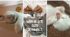 How many hours do cats sleep will depend on age, health and their activity level. All About Cats, Cat Sleeping, Cat Facts, Kitty, Moon, Activities, Awesome, Animals, Little Kitty