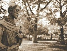 st-francis Francis Of Assisi, St Francis, St Joan, Cleric, Cemetery, Saints, History, Couple Photos, Heart