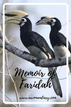 Who is Faridah? Faridah is an oriental pied species of hornbill. She is the partner to a male oriental pied hornbill named Jimmy. Both of them decided to build their home at Piasau Camp: a cleared forest area built in the that was turned … Memoirs, Oriental, Shell, Life, Conch, Shells