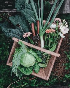 Landscaping Software - Offering Early View of Completed Project A Winter Harvest Of Cabbage, A Baby Leek, Tuscan Kale, Snow Peas And A Handful Of Flowers. Utilizing The Harvest Basket From My Shop Cosmos, Permaculture, Farm Gardens, Outdoor Gardens, Vegetable Garden, Garden Plants, Farm Lifestyle, Harvest Basket, Veggie Patch, Morris