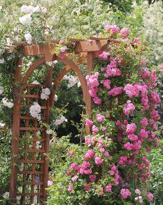 Our Garden Journal: The Peggy Martin Rose Journal Thornless climber