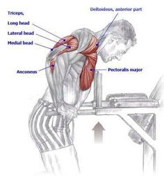 Chest and Triseps - Dips