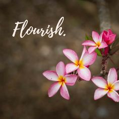 Flourish. How to change your year with just one word.