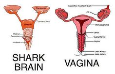Periods Will Now Be Called Shark Week