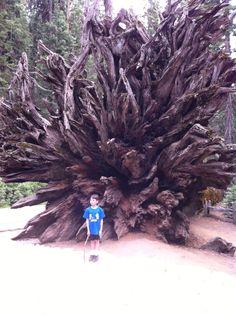 Nathan next to a fallen redwood tree at Yosemite